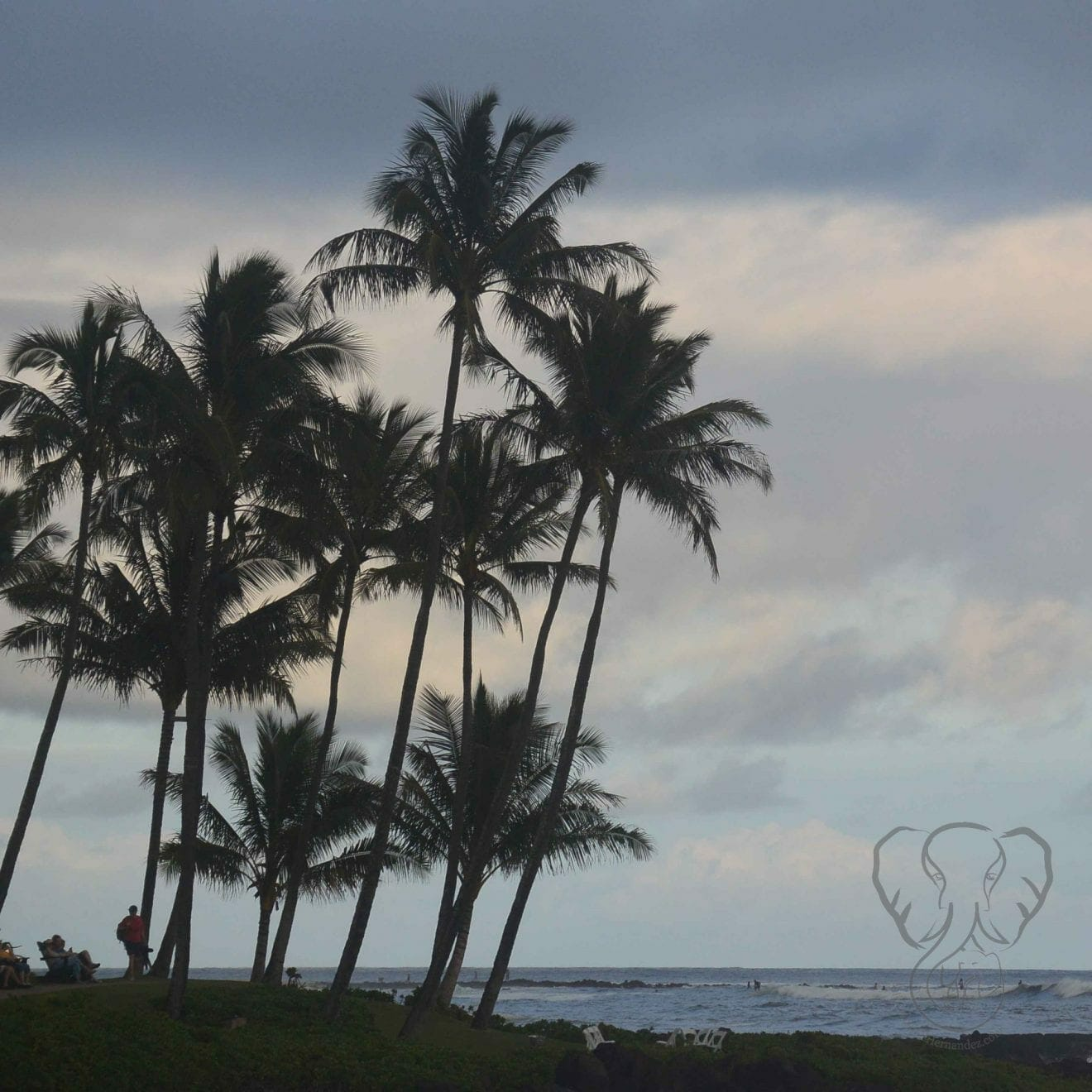 Palm tree over the ocean in late afternoon in Kaua'i, Hawai'i (MIranda Hernandez)