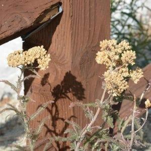 Wildflowers in South Lake Tahoe, California (Miranda Hernandez)